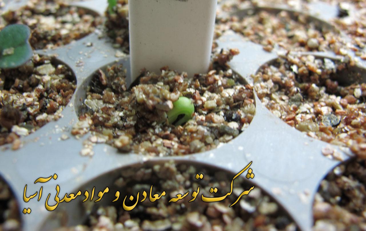 ورمیکولیت ویژه نشا و کاشت بذر انواع گل و گیاه