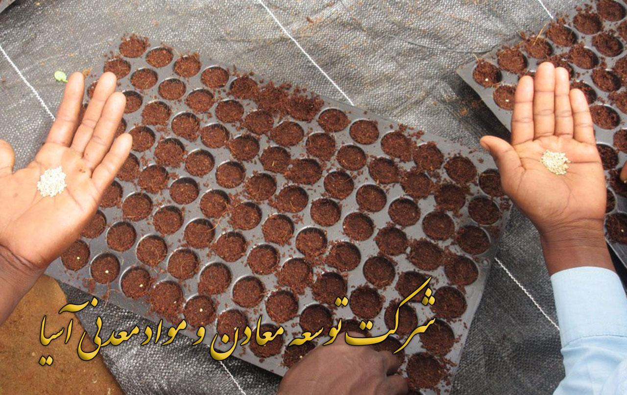 کاشت بذر در سینی نشا کوکوپیت