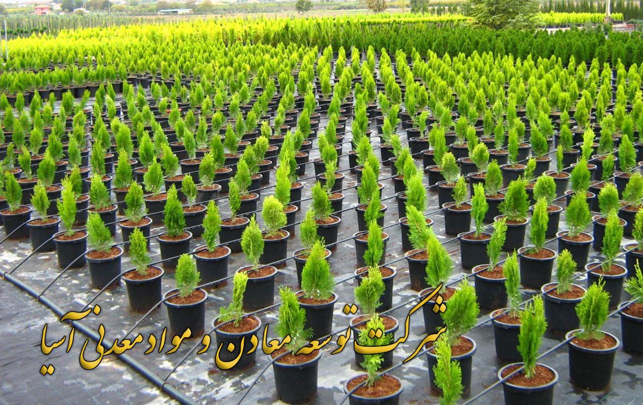 کوکوپیت پرورش انواع نهال و درختچه کوکوپیت هندی سریلانکایی خرید کوکوپیت قالبی