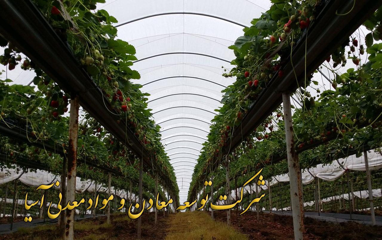 پرورش و کشت هیدروپونیک توت فرنگی و بلوبری در بستر پرلیت و کوکوپیت به روش هیدروپونیک و آکواپونیک