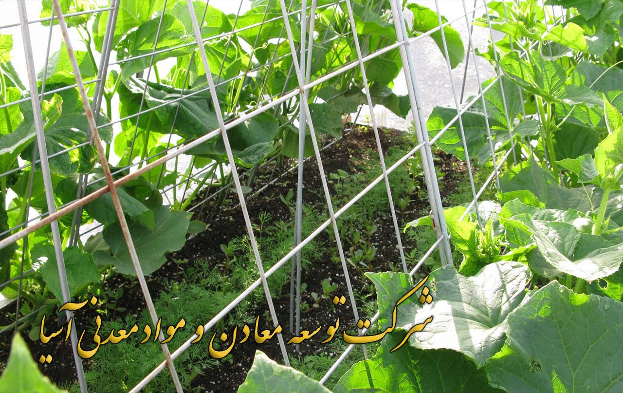 پرورش خیار گلخانه ای در بستر پرلیت