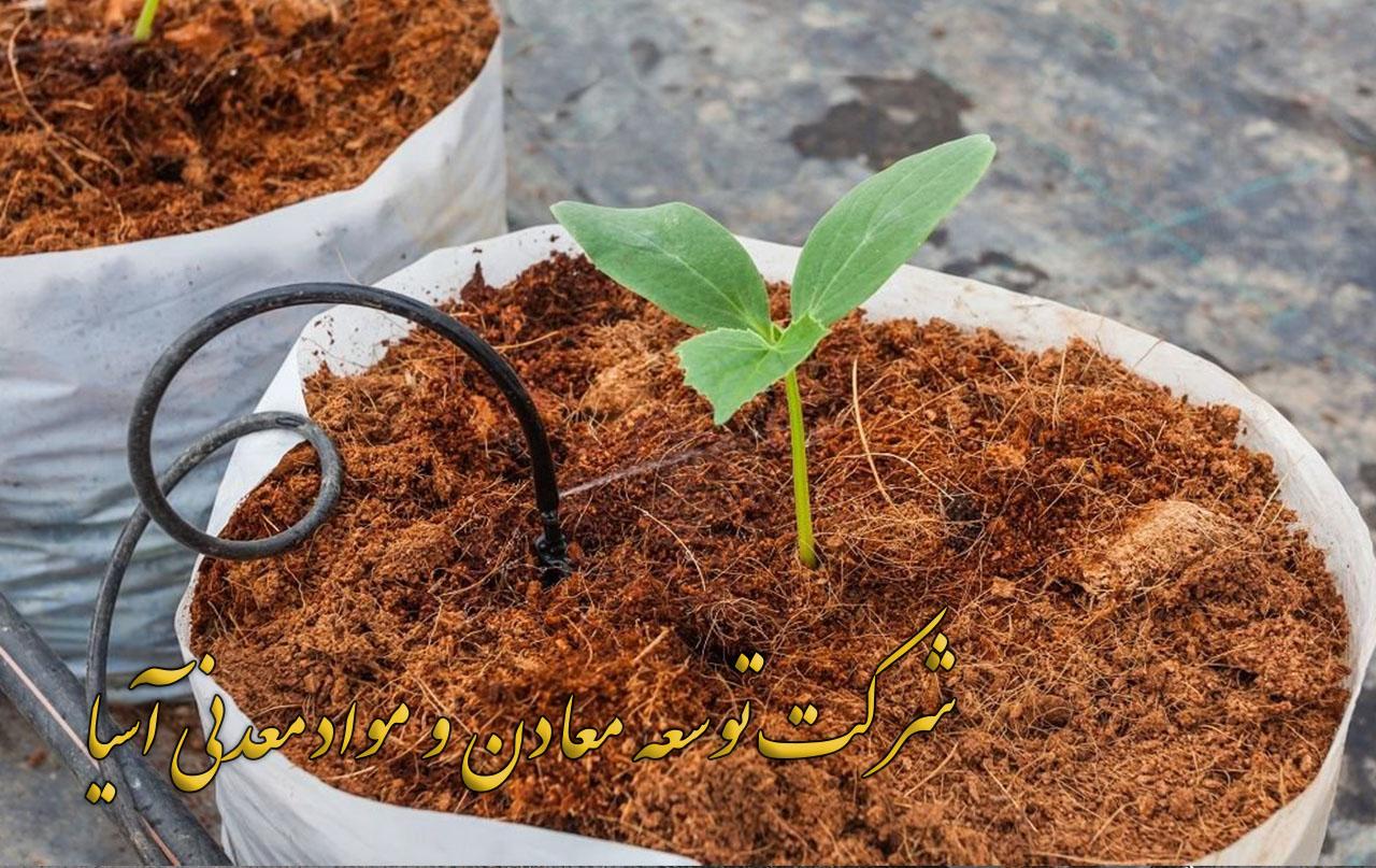 کاشت گیاه در بستر کوکوپیت