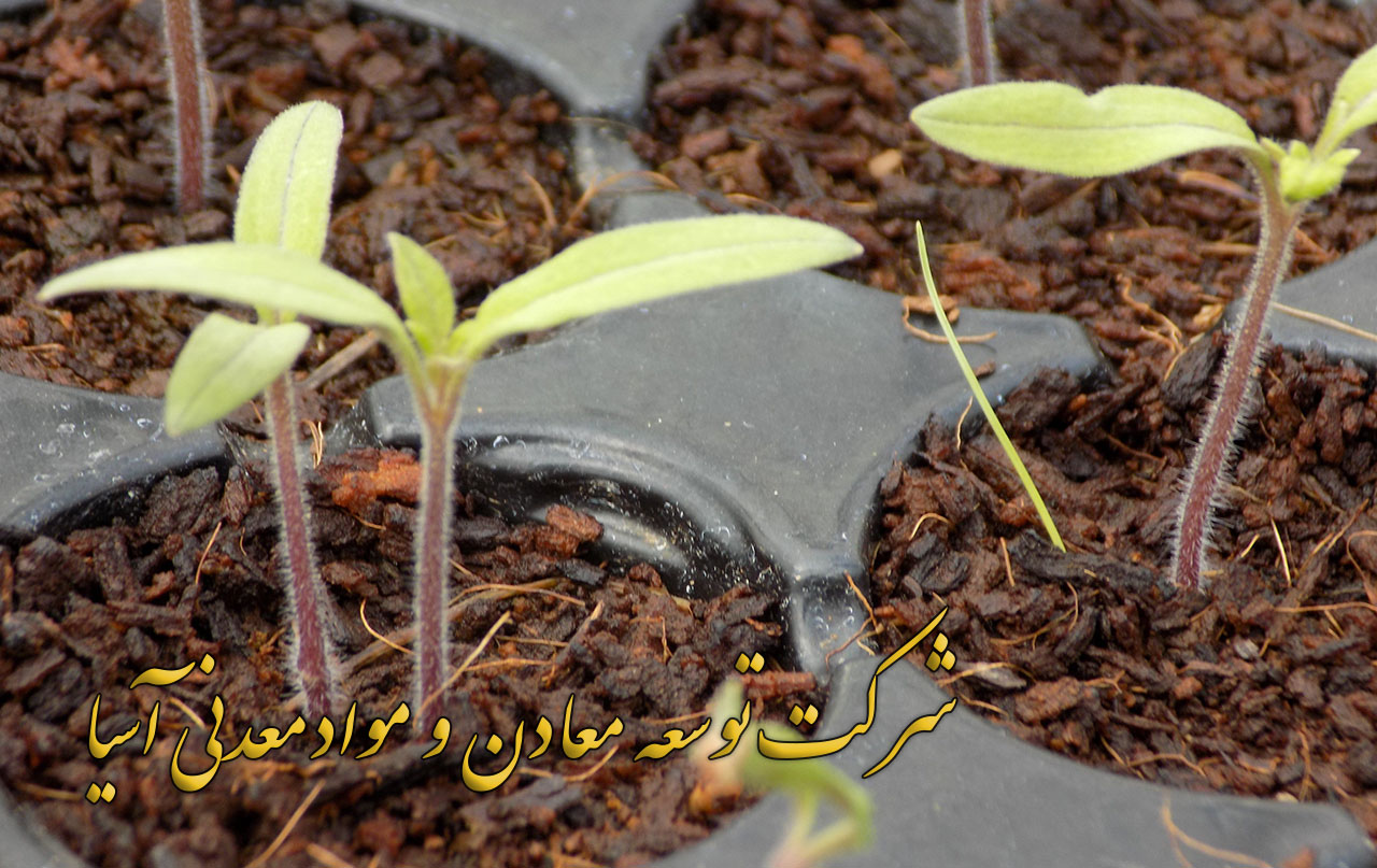 پیت ماس سینی نشا کشاورزی باغبانی گلخانه