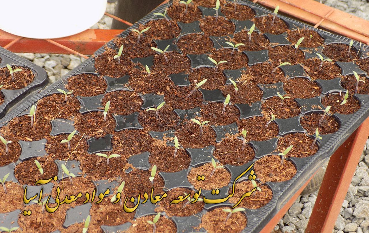 پیت ماس ویژه سینی نشا و پرورش و کاشت انواع بذر پیت ماس ویژه سینی نشا پیت ماس قهوه ای پیت ماس سفید پیت ماس سیاه