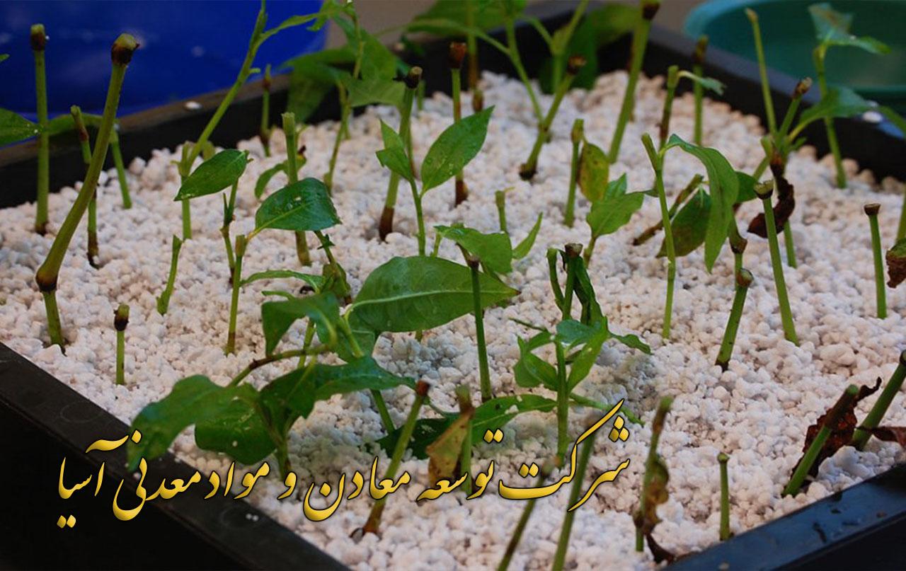 خاک پرلیت قلمه و نشا پرلیت باغبانی و کشاورزی