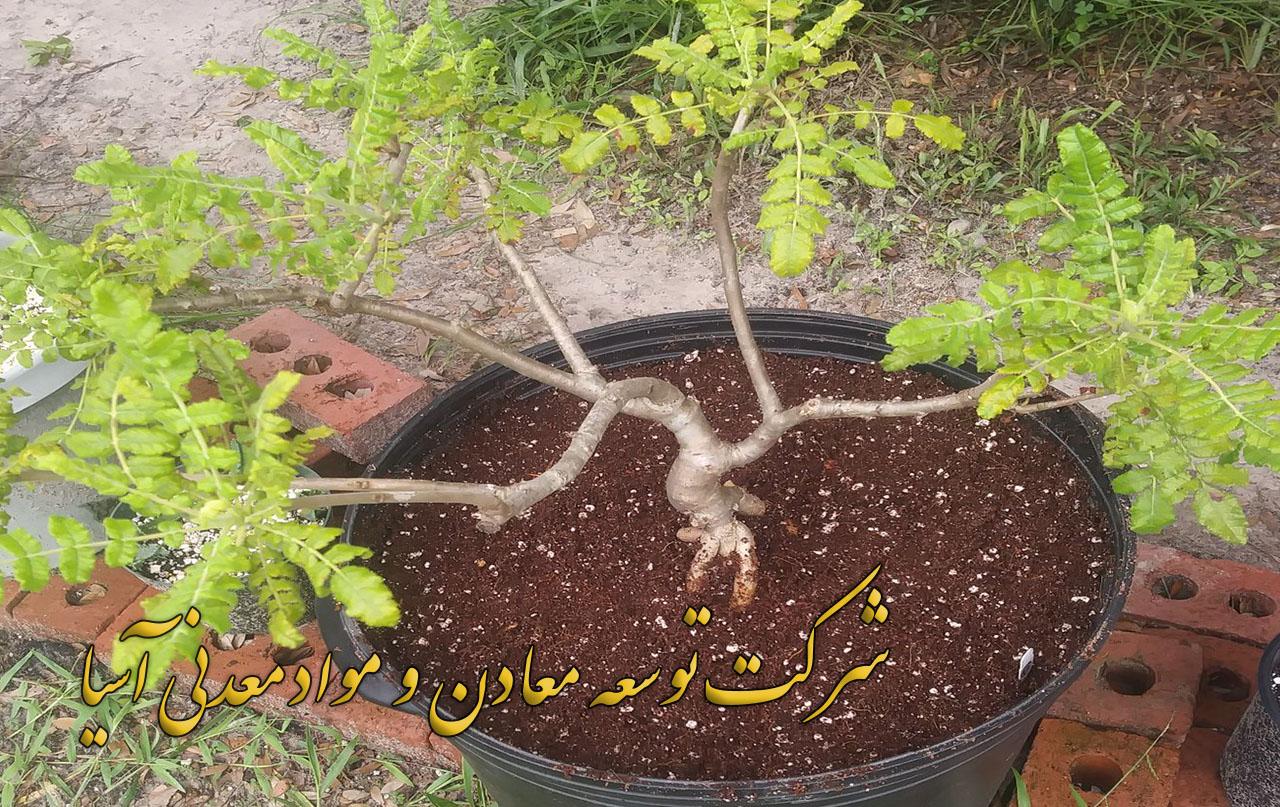 پرورش گل و گیاه در بستر پرلیت و کوکوپیت