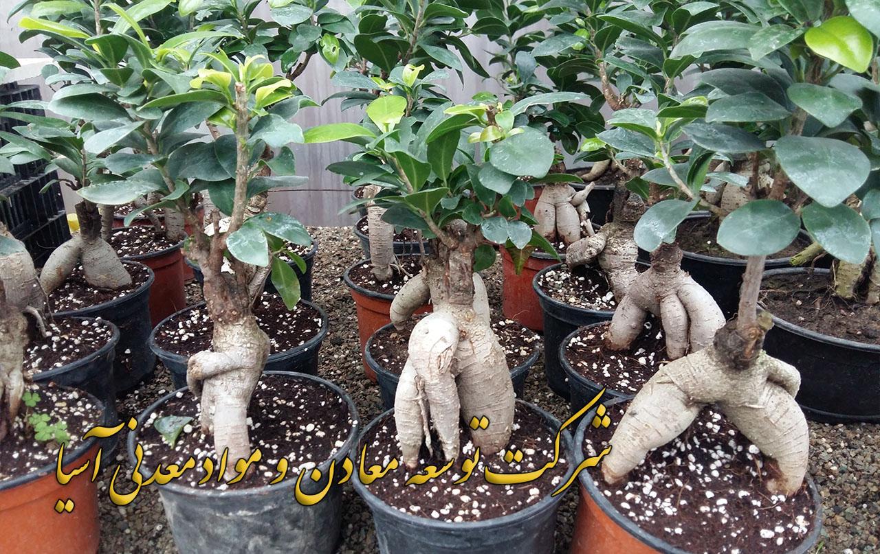 پرلیت و کوکوپیت ویژه پرورش بنسای خاک برگ کمپوست ورمی کمپوست