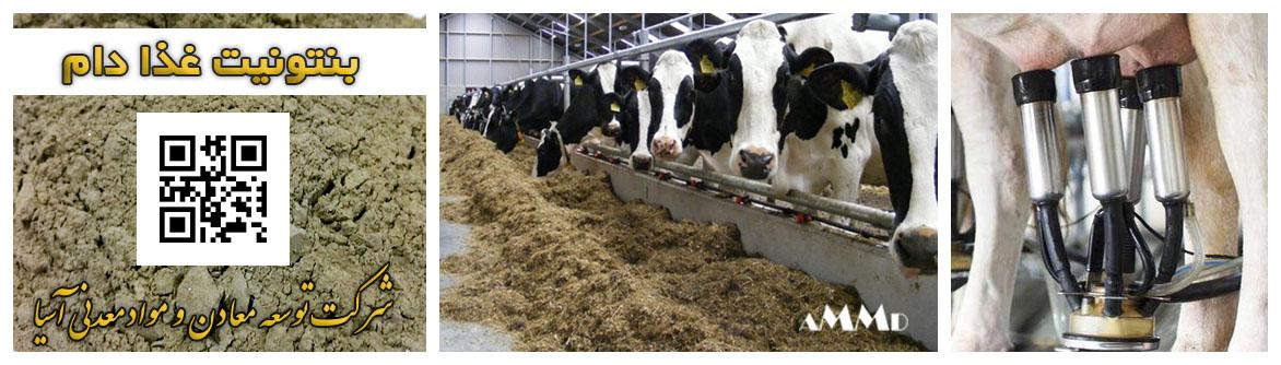 بنتونیت غذای دام برای افزایش چربی و پروتئین شیر گاو شیری پرواری خوراک گاو جیره غذایی