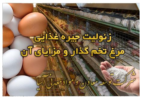 زئولیت جیره غذایی مرغ تخم گذار و مزایای آن خوراک مرغ تخمی