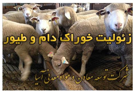 زئولیت خوراک دام و طیور گاو گوسفند مکمل غذایی