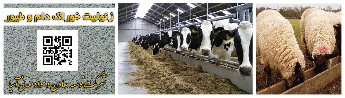 زئولیت خوراک دام و طیور آنزیمیت پرورش گوساله گوسفند شتر مرغ بوقلمون گاو جیره غذایی دام حیوان