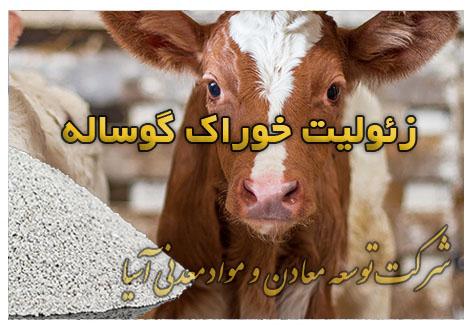 زئولیت خوراک گوساله گوسفند جیره غذایی پرواربندی دامداری مرغداری گاو شیری و پرواری