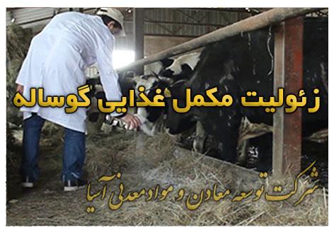 زئولیت مکمل غذایی گوساله جیره غذایی گوساله پرواری گاو شیری پرورش گوساله