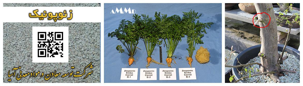 زئوپونیک بستر کشت زئولیت پرورش گیاه خاک کود زئولیت کشاورزی باغبانی پرورش نهال گل و گیاه Zeoponics
