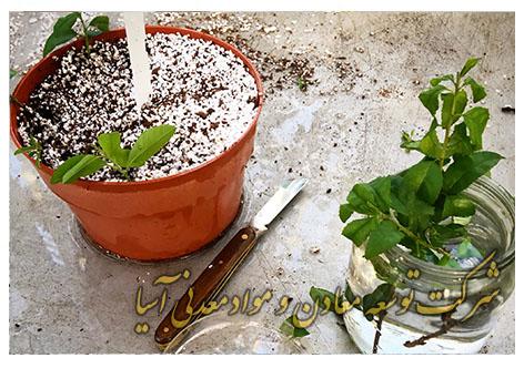 پرلیت قلمه نشا کاشت گل و گیاه قارچ پرورش خاک سبک