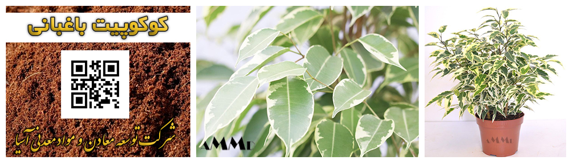 کوکوپیت باغبانی پرورش گل گیاه شاخه بریده قلمه گلدان پرلیت خاک سبک  نشا
