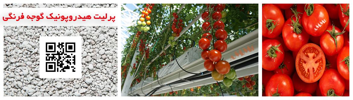 کشت هیدروپونیک گوجه فرنگی پرلیت گوجه گیلاسی نشا گوجه فرنگی پرورش گوجه