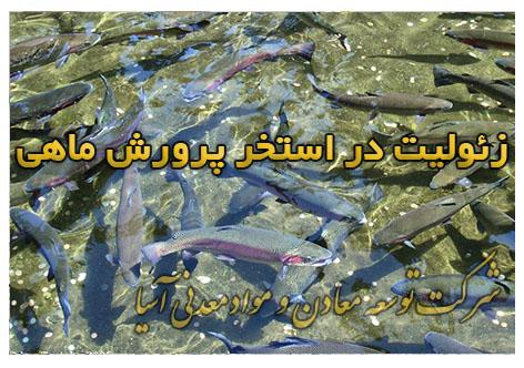 زئولیت استخر پرورش ماهی پلت خوراک ماهی رشد بیشتر وزنگیری ماهی کپور قزل آلا آب سرد