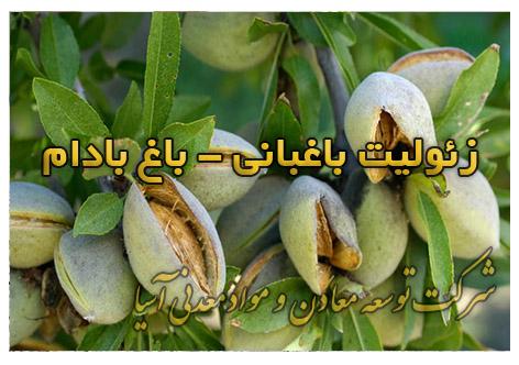 زئولیت باغبانی باغ بادام افزایش مقاومت نهال بادام در برابر شوری خاک زئولیتی هوشمند جذب رطوبت پرورش درخت و باغ بادام