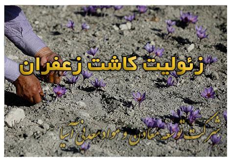 زئولیت کاشت زعفران پرورش پیاز زعفران در گلخانه آبیاری زعفران خاک مناسب کاشت و پرورش پیاز زعفران زئولیت طبیعی