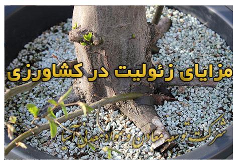 مزایای زئولیت در کشاورزی و باغبانی کاهش دور آبیاری و مصرف آب و افزایش راندمان مصرف کودهای افزوده شده کشت گلدانی نهال و درخت خرید خاک زئولیت معدنی