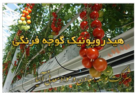 هیدروپونیک گوجه فرنگی بستر کشت پرلیت گروبگ خاک سبک پرلیتی گوجه فرنگی گلخانه ای دانشنامه محصولات کشاورزی و باغبانی گوجه گلخانه ای