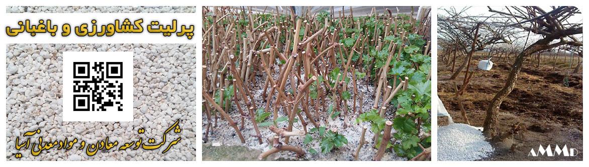 پرلیت کشاورزی باغبانی قلمه