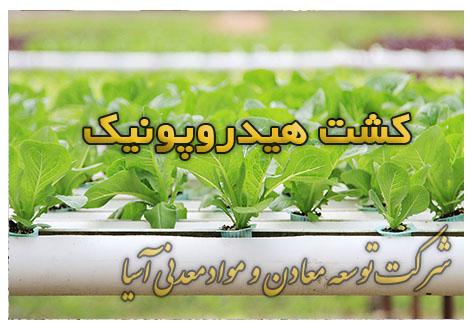 کشت هیدروپونیک بستر کشت سیستم تغذیه گیاهان در کشت هیدروپونیک محصولات گوجه فرنگی، خیار، فلفل توت فرنگی ، گیاهان برگی مثل کاهو، سبزی