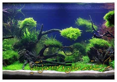 plant aquarium terarium پلنت آکواریوم تراریوم سیلیس بستر سنگ رنگی شن رنگی سفید سنگ دانه بندی سیلیس